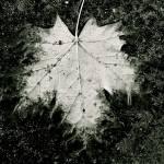 """""""fall07"""" by Mokedophoto"""