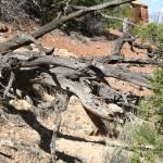 """Dead Tree"" by ReptilesandRenderings"