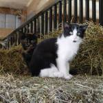 """Barn cats"" by SHaller"