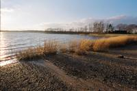 Windy Salt Marsh - Winter - CT  - Spartina alterni