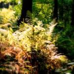 """glowing ferns"" by MaxRempel"