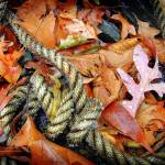 """Leaves and a rope"" by MaxRempel"