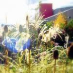 """decorative plants"" by MaxRempel"