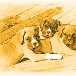 """Trio of boxer puppies!!!"" by Ritmoboxers"