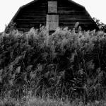 """Barn"" by monstershaq2000"