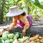 """Thai Fruit Seller"" by AndreaMoorePhotography"