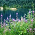 """Gold Creek Pond"" by PatriciaDanielPhotography"