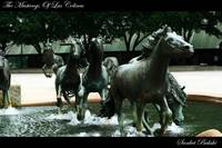Mustangs Of Las Colinas