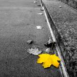 """Autumn Leaves"" by WaynePhotoGuy"
