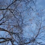 """""""toronto sky"""" by lara111"""