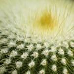"""Round Cactus"" by JKLsemi"