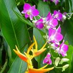 """Heliconia and Orchids"" by JackHolmes"