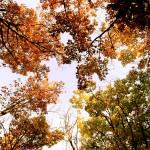 """""""Autumn Sky"""" by SarahLe"""