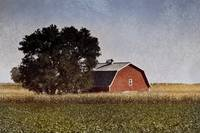 red barn in cornfield