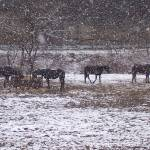 """Horses in the Snow"" by MaryBeth"