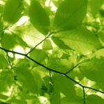 """""""green leaves"""" by SarahLe"""