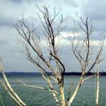 """""""Tree In Water"""" by shutterbugs"""