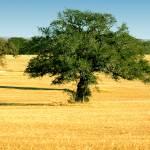 """""""Texas Hay Fields"""" by Kirby"""