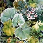 """Geraniums Galore image"" by studiobythesound"