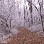 """Icy Path"" by Malibubarb"