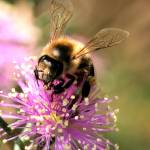 """Busy Bee"" by David_Rich_Photography"