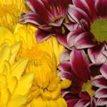 """flowers"" by jeannequiltslinden"