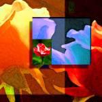 """Backlit Roses"" by Stephensfineart"