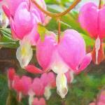 """bleeding heart"" by Kerry"