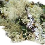 """Natures Lichen"" by OutsideShooter"