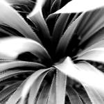 """""""Arizona Prickly Plant"""" by kcpetersen"""