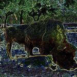 """techno buffalo"" by cowden"
