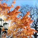 """""""Evening Light"""" by lengrossman"""