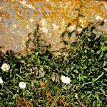 """curb weeds texture"" by eyecontact"