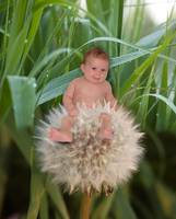 August Dandelion Flower Baby