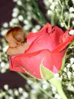 Rose Flower Baby large