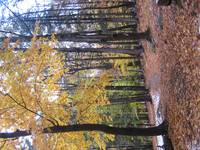 Autumn Yellow Tree Harriman State Park NY