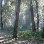"""Smokey Woods"" by norcalartnudes"