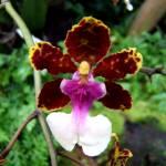 """orchids 4"" by prajuvikas"