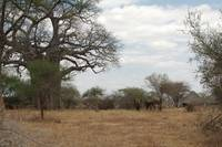 Elephant Herd near Tarangire Safari Lodge 2