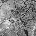 """Snow Covered Branches 2006"" by joanndeasy"