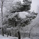"""Treeglacier"" by jandmphoto"