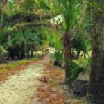 """Myakka Trail"" by cab"
