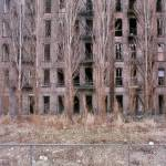 """Tenement Trees (1978)"" by Llewellyn"