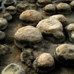 """stromatolites"" by IanRobertson"