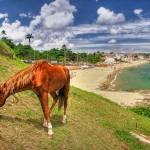 """Chesnut Horse Grazing"" by WillAustin"