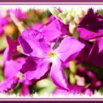 """""""Sunny Moment..."""" by argosphotos"""