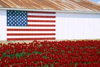 UNITED STATES FLAG AND TULIPS