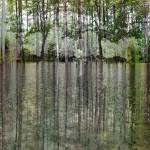 """Reedy Park Reflections"" by PhotoViewPlus"