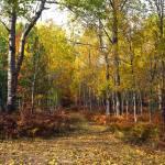 """Forest Road"" by RichardBaumer"