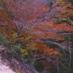 """""""Tree and Dune"""" by RichardBaumer"""